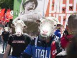 pecore-fascisti
