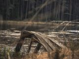 Palude-Swamp-europa-free