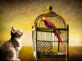 gatto-e-pappagallo-in-gabbia-free